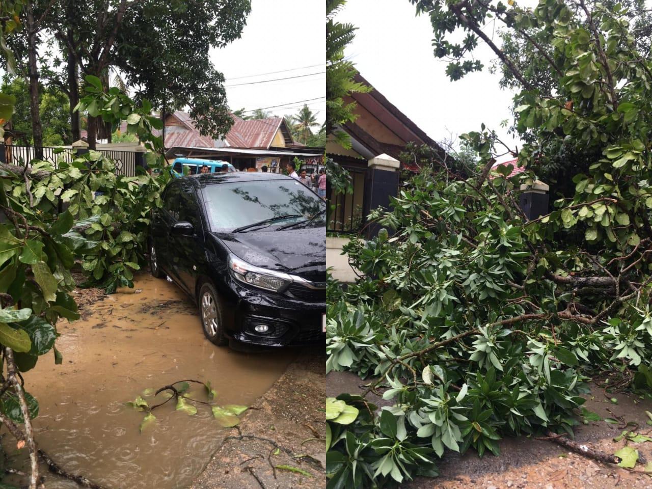 Pohon tumbang menimpa sebuah mobil di Depan SMA Muhammadiyah Kendari. (Foto : Istimewa)