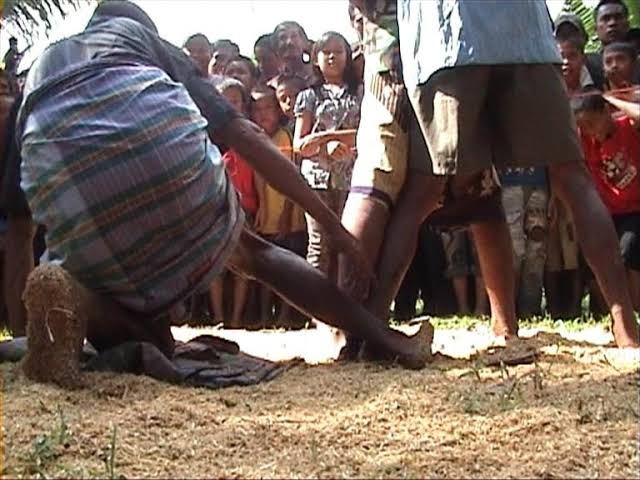 Tradisi Mallanca, Tradisi Adu Betis yang Unik di Sulawesi Selatan