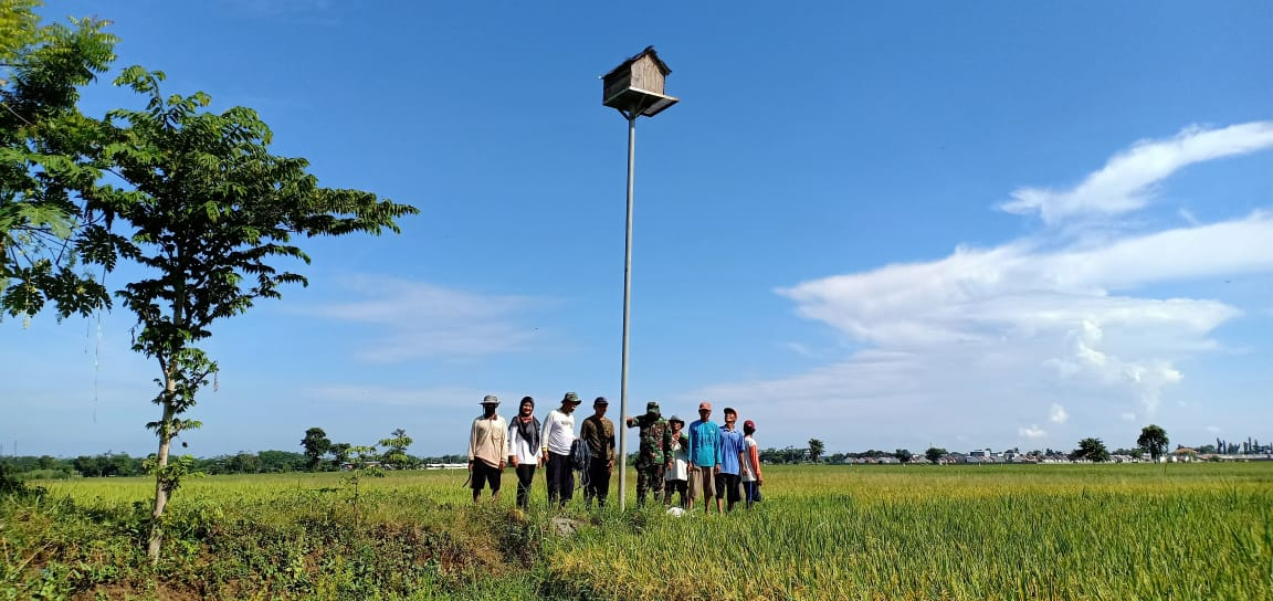 Di Tengah Maraknya Pandemi Corona Babinsa Pelopori Pembuatan Rumah Burung Hantu