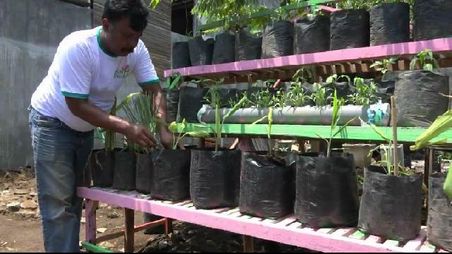 Perkuat Daya Tahan Tubuh, Warga Kampung di Kota Probolinggo Tanam Toga Bersama