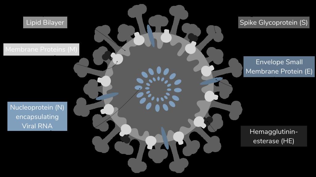 Teori Konspirasi: Problem, Reaksi dan Solusi, di Balik Teror Virus Corona. (igem.org)