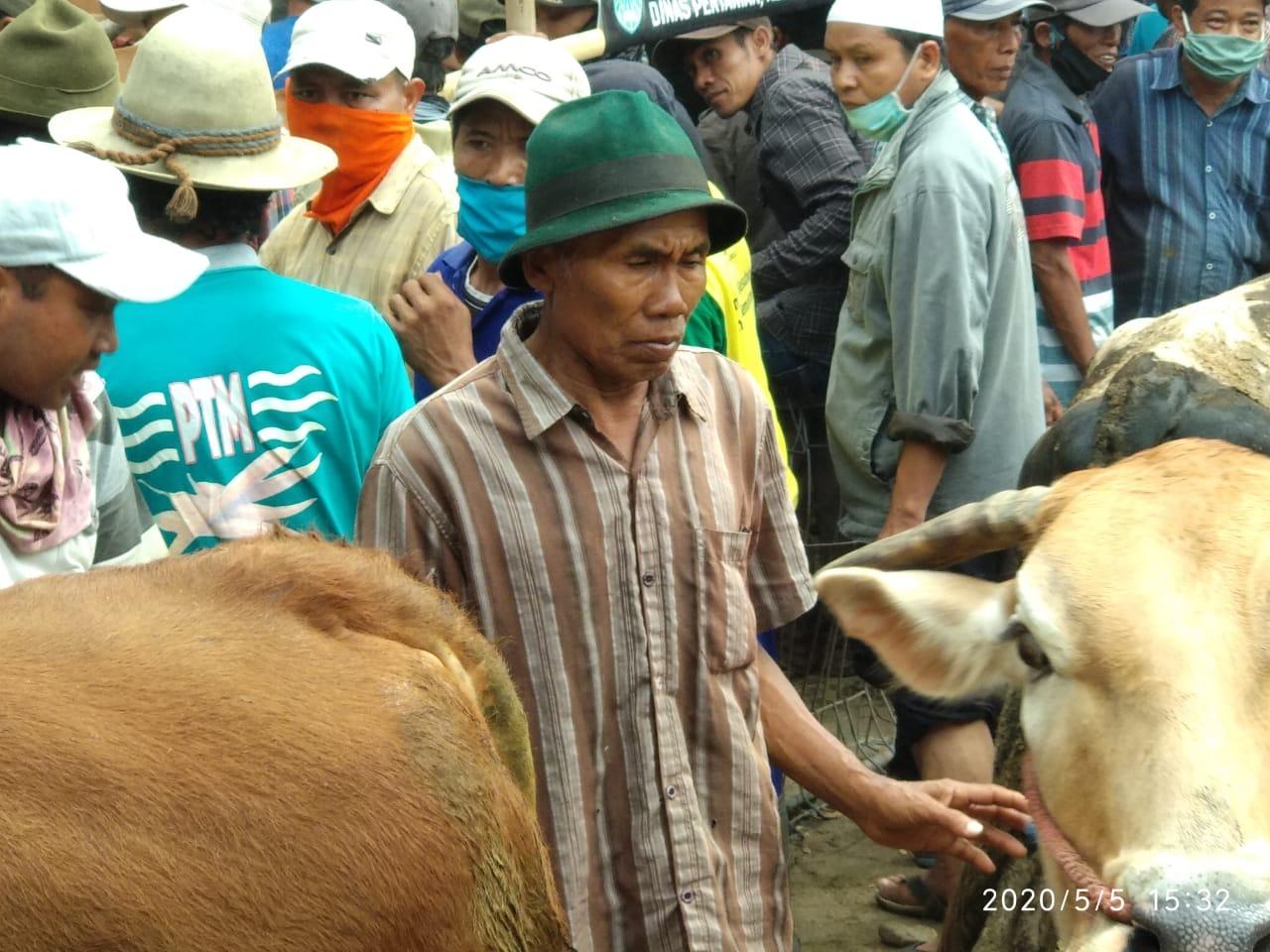 Antisipasi Penyebaran Covid-19 Pasar Hewan Wonoasih Ditutup Pemkot Probolinggo, Perkumpulan Pedagang Sapi Buka Pasar Hewan Swasta