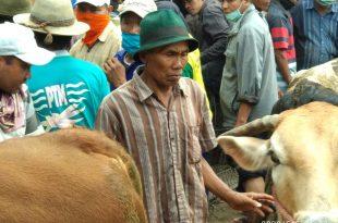 Himbauan Walikota dan Muspida Kota Probolinggo Tidak Dipatuhi Pedagang dan Pembeli, Akhirnya Pasar Sapi Wonoasih Ditutup