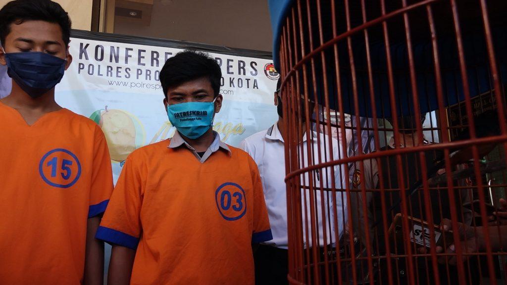 2 Pencuri Burung Bernama Buldoser Sang Juara, Ditangkap Tim Buser Satreskrim Polres Probolinggo Kota