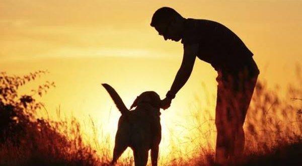 Seekor Anjing Tolong Orang Buta Berjalan, Warganet Terharu. (foto ilustrasi: Quicksilver)