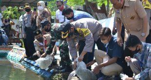 Apresiasi Kampung Tangguh Wiro Secang Hadapi Pandemi Corona, Forkopimda Kota Probolinggo Tebar Benih Ribuan Ikan Lele dan Nila